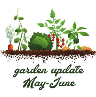 Vegetable Garden Update: May – June