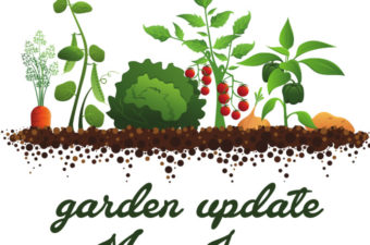 Vegetable Garden in Raised Beds Update with progress from May to June