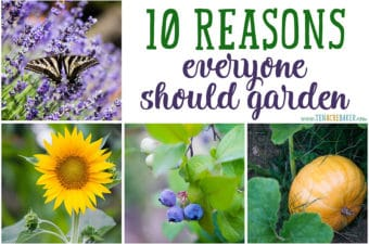 Top 10 Reasons Everyone Should Garden