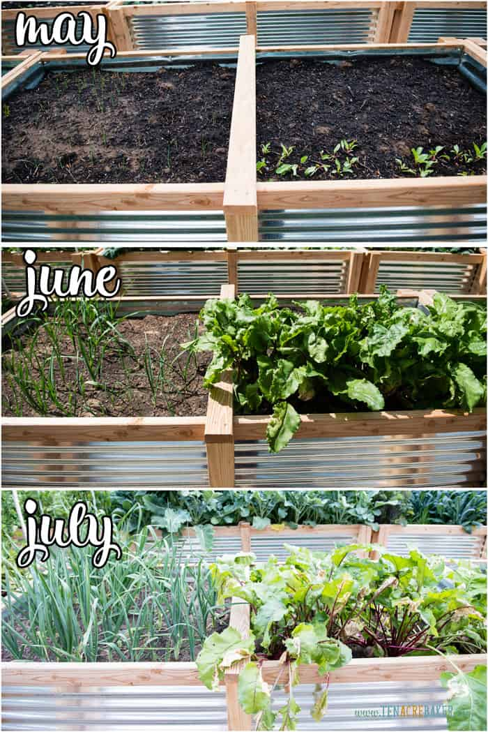 vegetable garden changes from May to June to July - beets and leeks