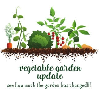 vegetable garden changes from May to June to July
