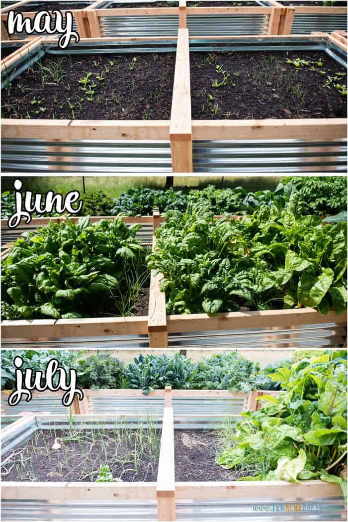 vegetable garden changes from May to June to July - spinach and onions