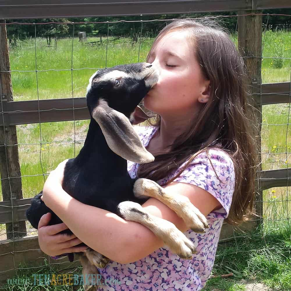 little girl kissing baby black nubian goat