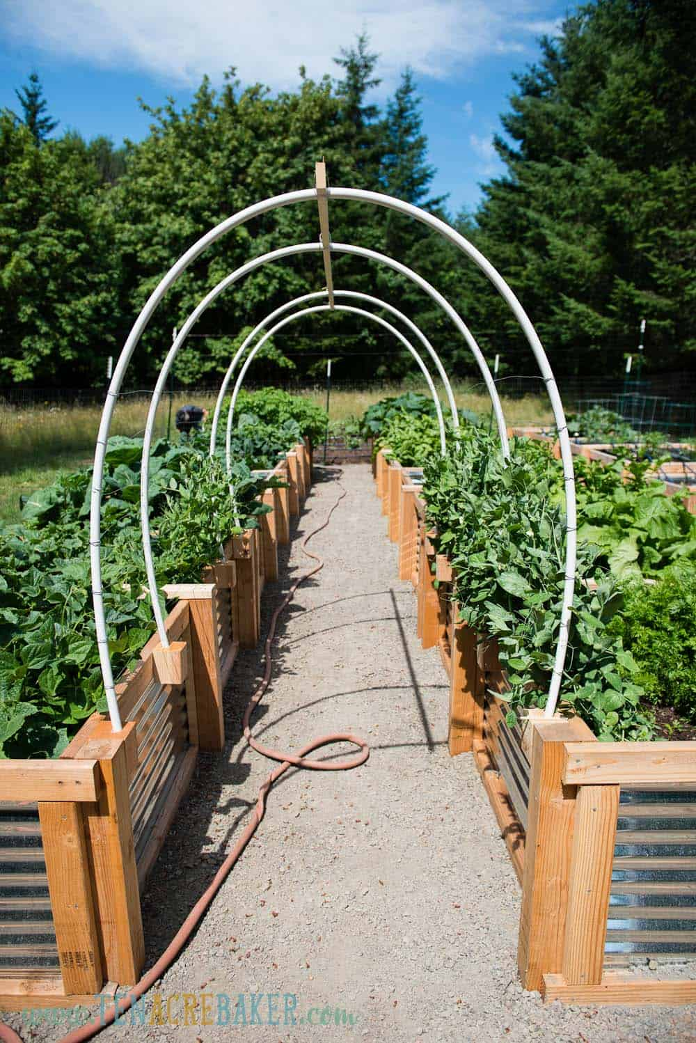 Arched Vegetable Garden Trellis Made From PVC Pipe
