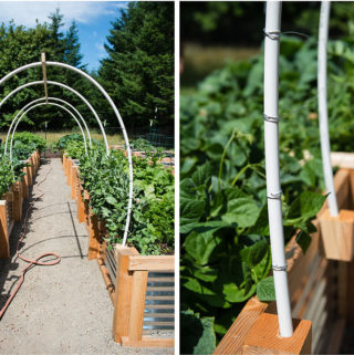 DIY Vegetable Garden Trellis with PVC Pipe, Wire, and wood