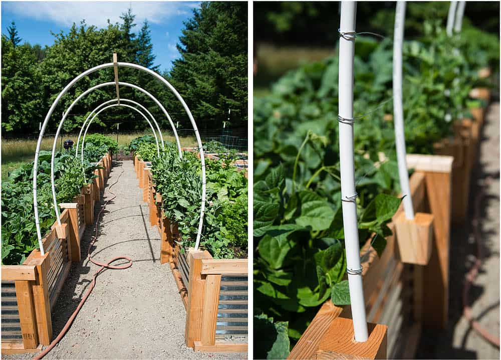 Diy Vegetable Garden Trellis Using Pvc And Wire Ten Acre