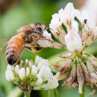 25 Fascinating Honey Bee Facts