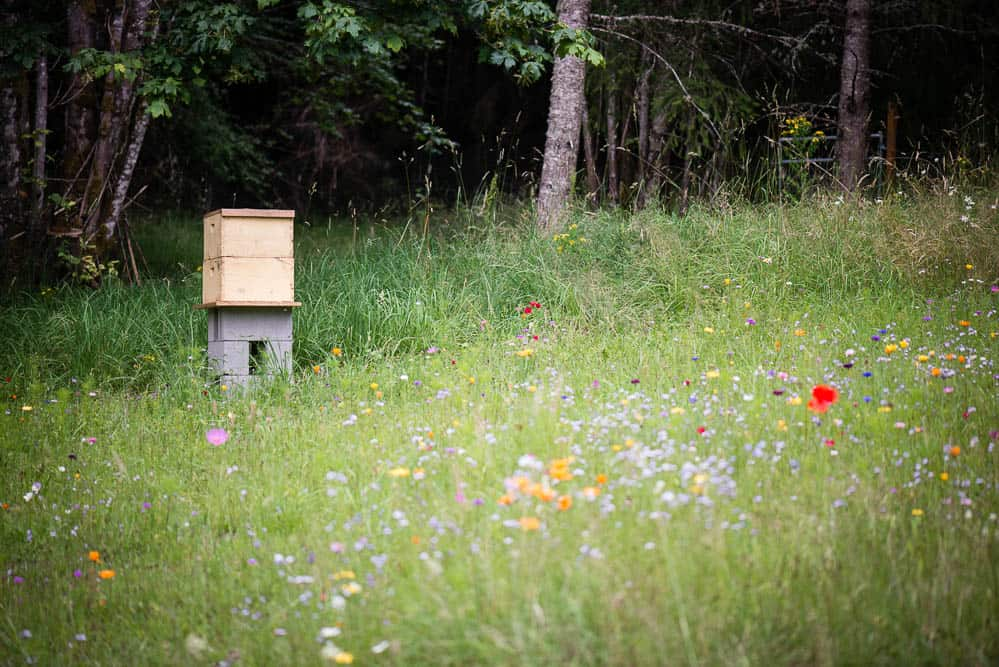 bee hive in wild flower pasture