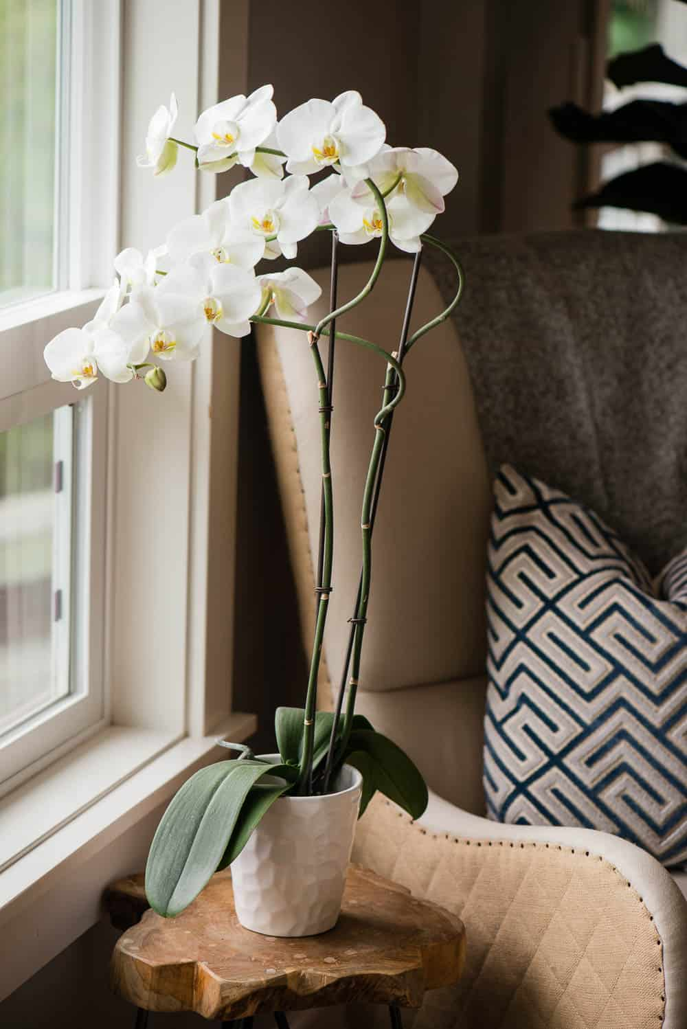 orchid care sunlight