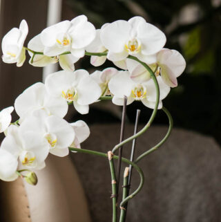 A Beginner's Guide to Orchid Care