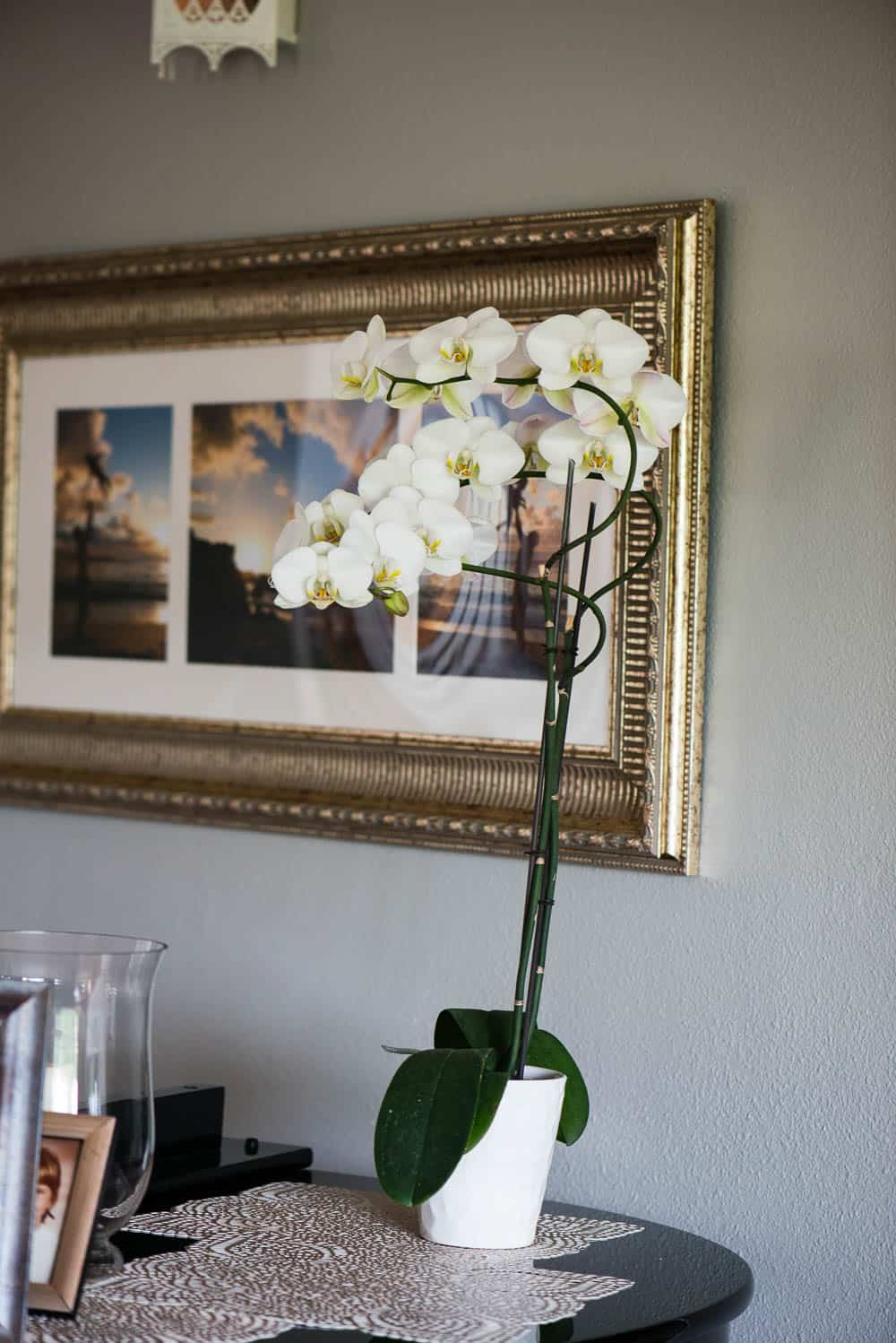 orchid care for beginners