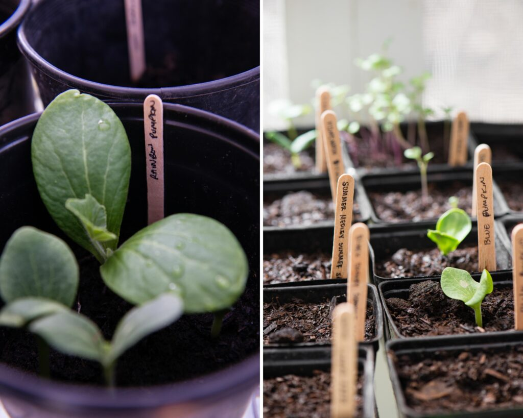 how to grow vegetables from seeds